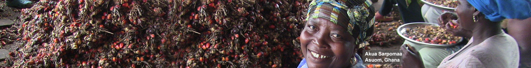 fair trade palmoil