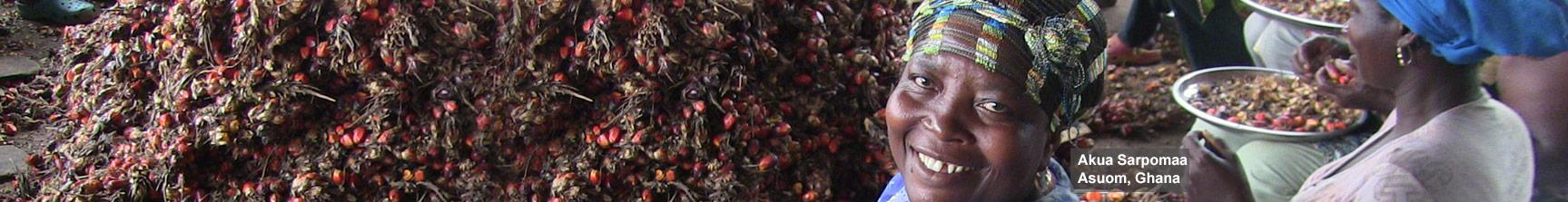 fair trade palmoil